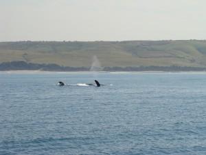 whale spotting on tecla