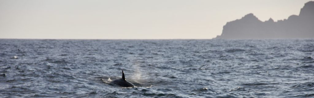 orcas spotted